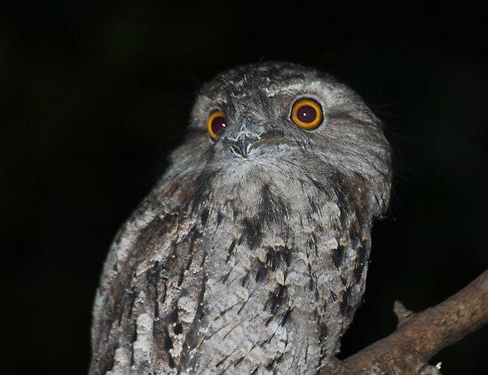 Night Vistor by byronbackyard