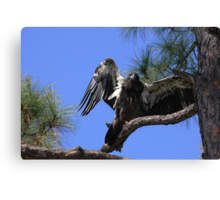 I am eagle bird Canvas Print