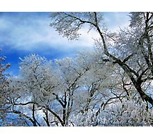 Frozen Trees (Ice Fog) Photographic Print