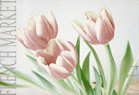 Pink Tulips by Brenda Boisvert