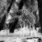 Giraffe by BabyM2