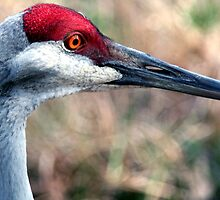 Floridian Crane by searchlight