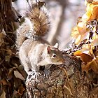 Babbling Squirrel Critter by Kate Eller