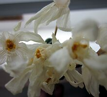 Wilted Paperwhites by Patricia  Butler