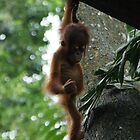 Hanging out at Singapore Zoo by Chris Cherry