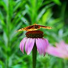 Coneflower And Friend by James Brotherton