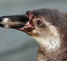 Penguin Portrait by Mark Hughes