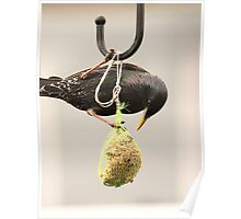 Bird Feed, not seed Poster