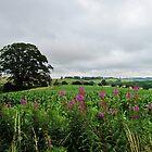 Rolling Devon Landscape by Janice Petitjean