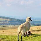Dartmoor Sheep by Janice Petitjean