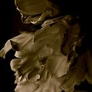 Libretto Tulips in Sepia by Barbara Wyeth