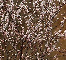 spring series four by davvi