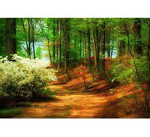Favorite Path Photographic Print