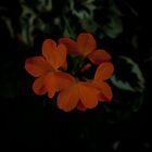 Orange Flower hidden in the darkness by Michael  Habal