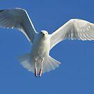 sea gull by neil harrison