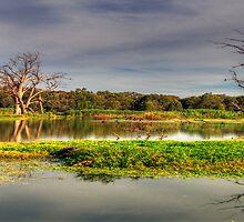 Wetlands Magic - Wonga Wetlands, Albury Australia - The HDR Experience by Philip Johnson