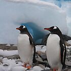 Gentoo penguins. by robinmaher