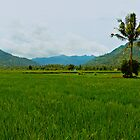 Indonesian Rice Field Scene by kaledyson