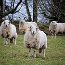 Rams by Anthony Thomas