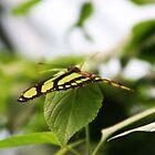 Wonder of Green by Dawn B Davies-McIninch