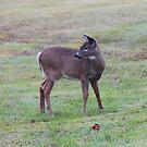 'Young Deer' by Scott Bricker