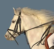 White Connemara Stallion by Richenda