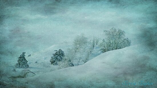 Blue Winter by Terrie Taylor
