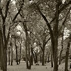 Abiquiu Fall Cottonwoods by klindsey