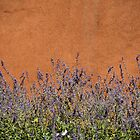 Cerrillos Adobe with Flowers by klindsey