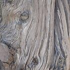 The Wrinkled Tree by kyliec77