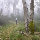 Misty Morning . Barrington Tops to Gloster Tops Packwalk. by Alwyn Simple