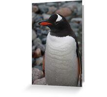 Gentoo penguin Greeting Card