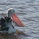 The Catch - Australian Pelican by Louise Linossi Telfer