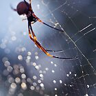 Once Upon a Spider by Adriano Carrideo