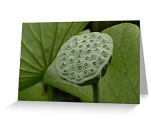WATER LILY  @ ROYAL BOTANIC GARDENS Greeting Card