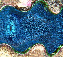 Giant Clam by Melissa Fiene