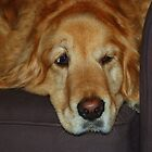 """Keeping an eye out [""""I don't think I should be on the couch""""] by Neville Gafen"""