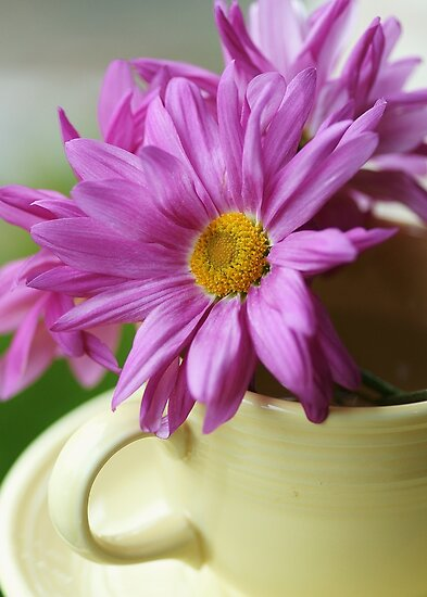 Happiness~~~ is a Cup Full of Daisies by KatWolfe
