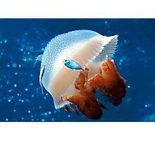Mosaic Jellyfish Photographic Print