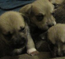 three of jerzy's pups by gabbielizzie