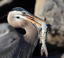 Catch of the day by kathy s gillentine