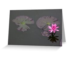 Lonely Lotus Greeting Card
