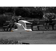 Seagull going by Photographic Print