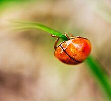 ladybutt .. i mean BUG :) by Julia Goss