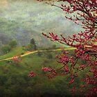 spring at Bralos by Daphne Kotsiani