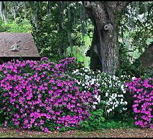 Backyard Azalea Bushes by mimsjodi