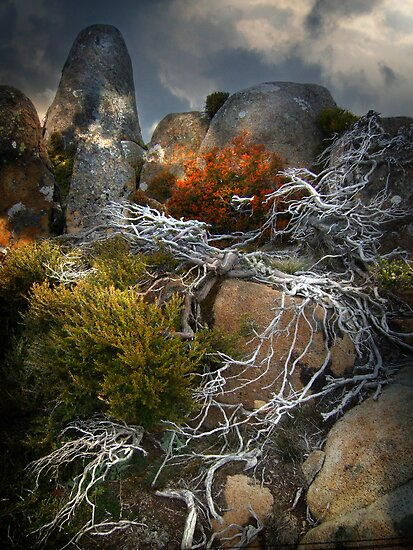 roots by Matt Mawson