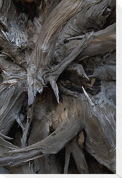 Tree Root Abstract by OrPhotoJohn