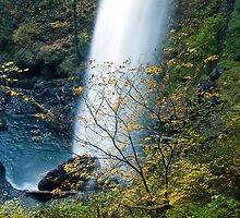 Fall Colors obscuring the North Falls at Silver Falls State Park by OrPhotoJohn