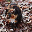 Camo Kitty by mojo1160